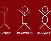 DEIN KÖRPERBAU: Bist du ein Ectomorph, Mesomorph oder Endomorph?